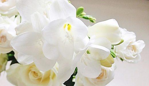 フリージアの花言葉と由来!白やピンクなど色別で20の意味!!