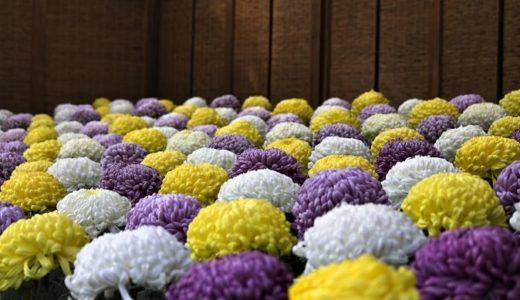 菊の花言葉を色別に!赤や黄色、紫など24個の意味とは!?