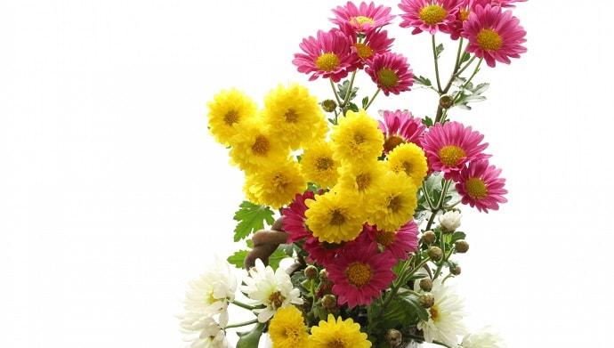 小菊とスプレー菊