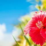 hibiscus-sky