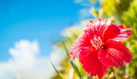 ハイビスカスの花言葉の意味!赤やピンクなど色別で11個紹介!!