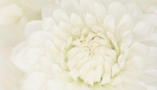 花言葉で感謝の意味を持つ14の花!ありがとうを伝えるならコレ!!