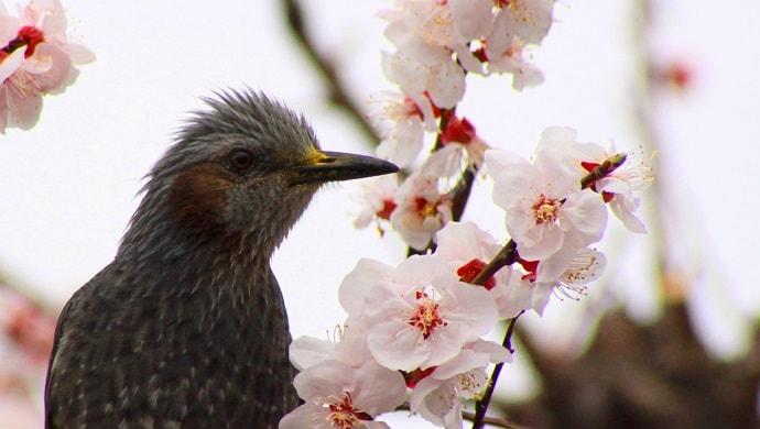 鳥と杏の写真