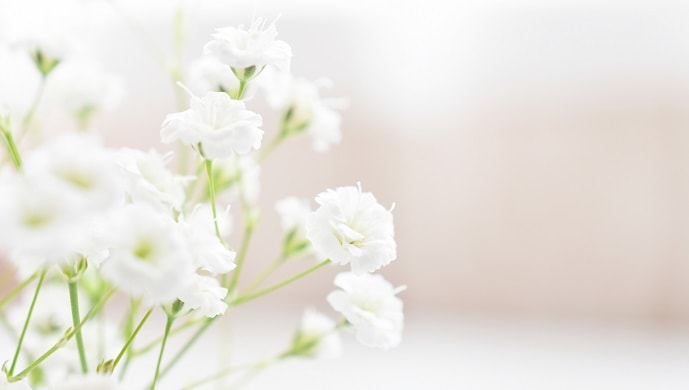 白いかすみ草