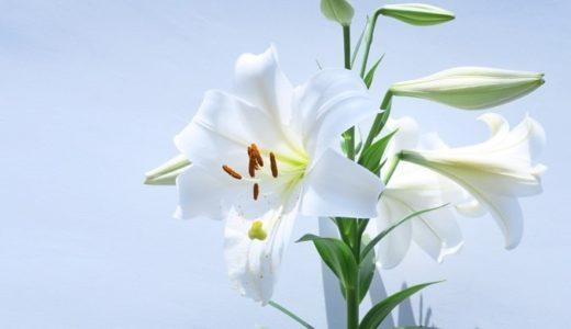 百合の花言葉は怖い?色別や品種で40以上ある意味とは!?