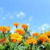 marigold-sky