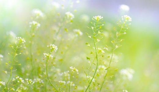 薺(ナズナ)/ぺんぺん草の花言葉は怖い?由来を知ると全然怖く無い