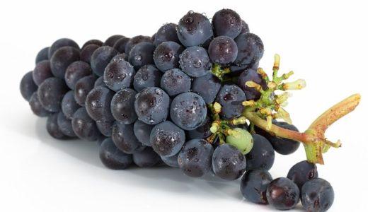 葡萄(ぶどう)の花言葉は狂気?ワインの原料に込められた9つの意味!!