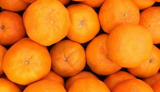 オレンジの花言葉は部位で違う!実や木に付けられた7つの意味